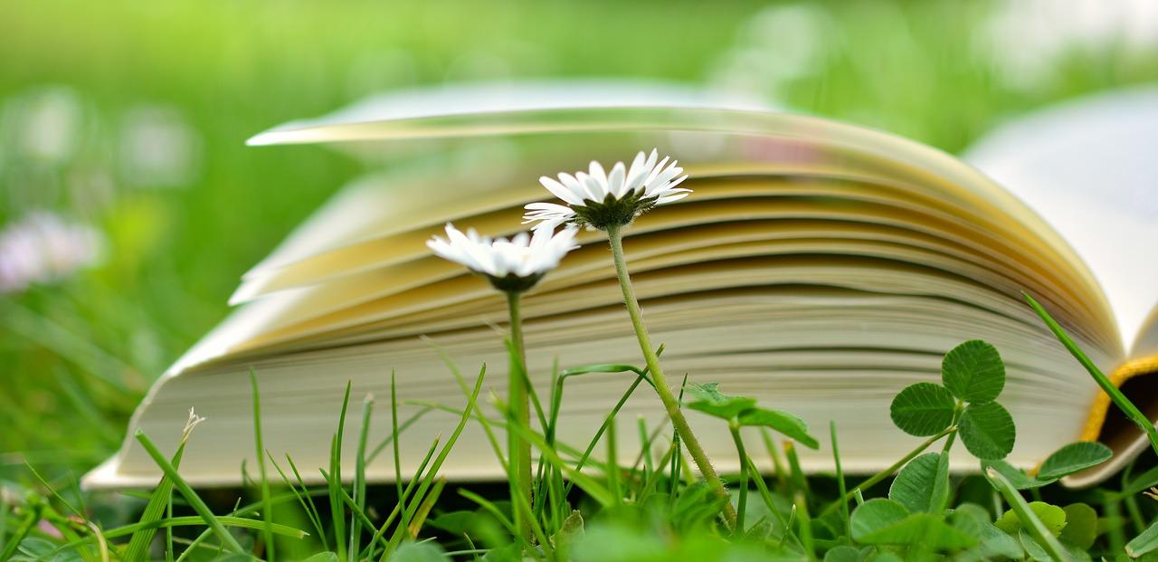 surdoués, liens et ouvrages - Psychologue enfants adolescents - Nantes